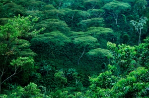 East African Rain Forest